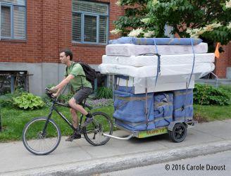 Déménageur à vélo en route à Montréal
